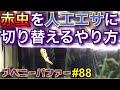 【アベニーパファー】飼育中‼︎ 88 エサ切り替えのやり方