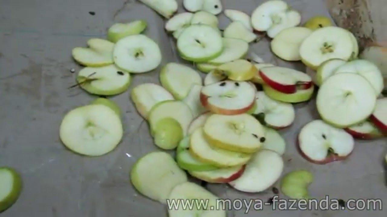 Купить сушилку для овощей и фруктов в минске теперь проще: сушилки для. Сушка фруктов, сушка грибов, сушка орехов, сушка ягод, сушка зелени,