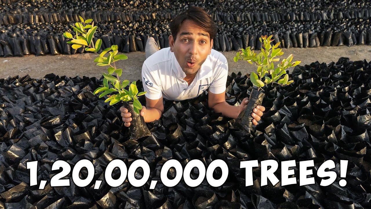 Planting 12,000,000 Trees - 12 Million