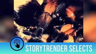 This moulting tarantula is terrifying