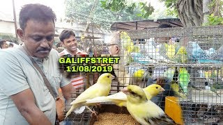 All Birds Price At Galiffstreet birds and pet market kolkata WestBengal 11/08/2019HD