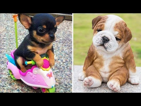 Baby Dogs ? Cute and Funny Dog Videos Compilation #2 | Funny Puppy Videos 2020