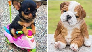 Baby Dogs 🔴 Cute and Funny Dog Videos Compilation #2 | Funny Puppy Videos 2020