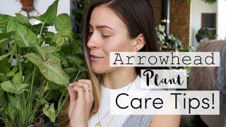 Arrowhead Plant Care Tips & Tricks! | Syngonium Vine Houseplant Care