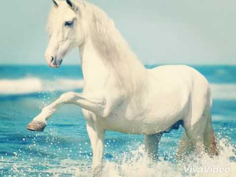 Шедевры фото лошадей
