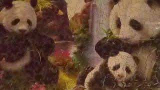 Panda Puzzle Update