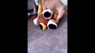 Самая пошлая собака
