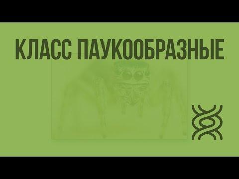 Видеоурок пауки