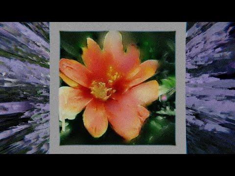 Hayley Williams - Roses/Lotus/Violet/Iris baixar grátis um toque para celular
