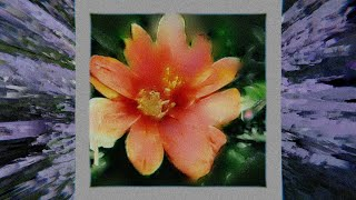 Hayley Williams - Roses/Lotus/Violet/Iris [Official Audio]