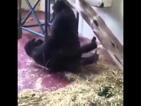 Wife slaps my cock videos