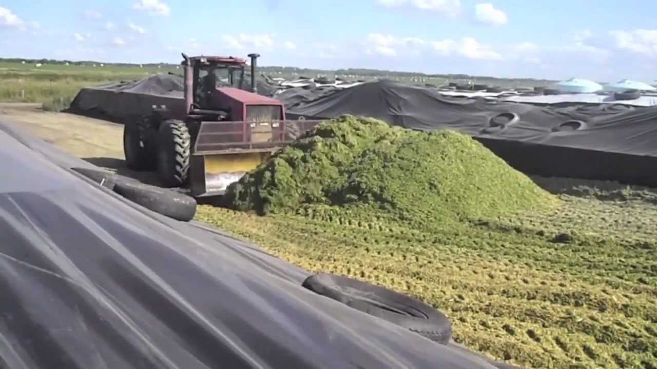 Silage 2011 - Dairy Farming in Canada - YouTube for Canadian Dairy Farms  29dqh