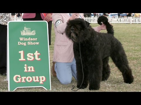 Windsor Dog Show 2015 - Working group