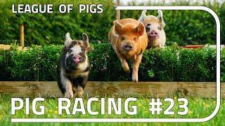 League of Pigs - Season 6 - Round 3!