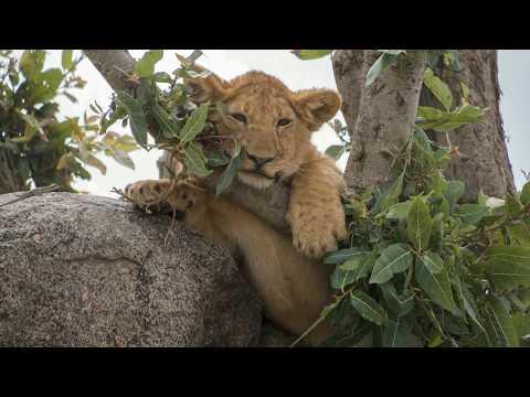 Safari in Nordtansania (Serengeti, Ngorongoro Krater, etc)
