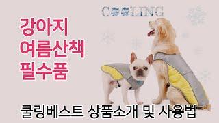 여름 산책 걱정 끝! 강아지 쿨링 원단 베스트 조끼 +…