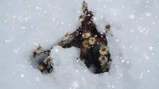 천리포수목원   겨울정원