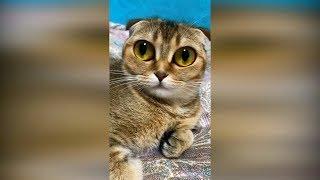 Лучшие приколы с животными 2019 Приколы про котов, смешные кошки 2019. Смешные видео про кошек 2019