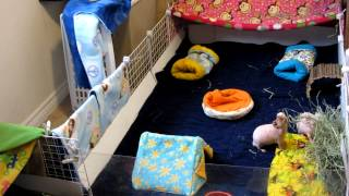How I clean my c&c guinea pig cage with fleece!