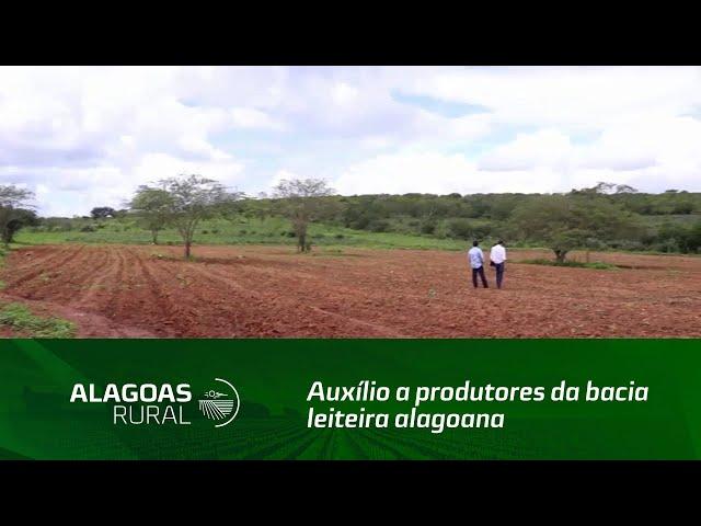 Projeto auxilia produtores da bacia leiteira alagoana
