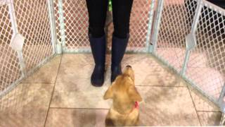 How To Teach Your Puppy Not To Jump