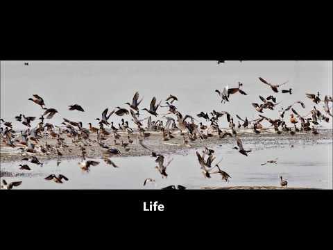 1000 Photos of Cyprus Birds by George Konstantinou