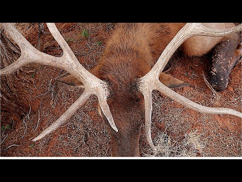 Bowhunting Elk In Arizona