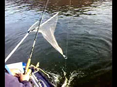 нугуш рыбалка весной