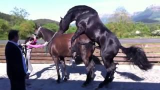 Repeat youtube video Horse Breeding