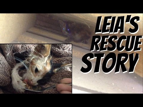 kitten chose to live! (leia's rescue story)