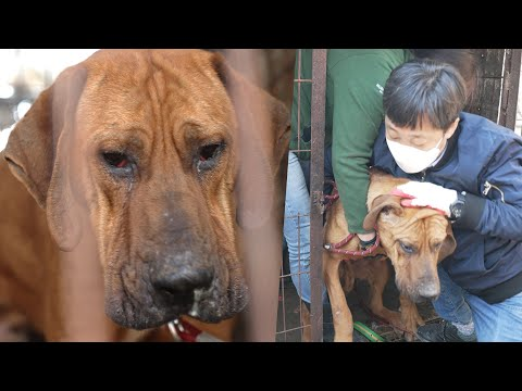 Robin: The last dog rescued from a meat farm