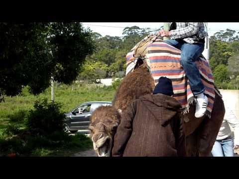 Tanger 2010 - dismounting a camel.MOV