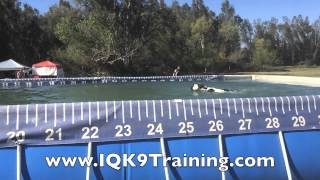 Iq K9 Training | Border Collie Whippet Mix | Bret Geller And Soldier Dock Diving!