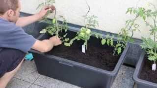 Tomatenkübel einfach und günstig selbst bauen
