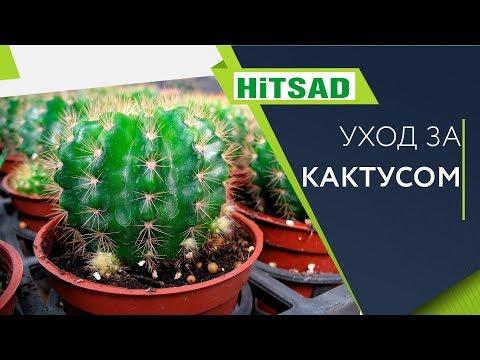 Кактус 🌵Посадка и Уход 🌵 Полезные советы | цветоводство | садоводство | полезные | кактусом | русский | хитсад | советы | кактус | уход | дома
