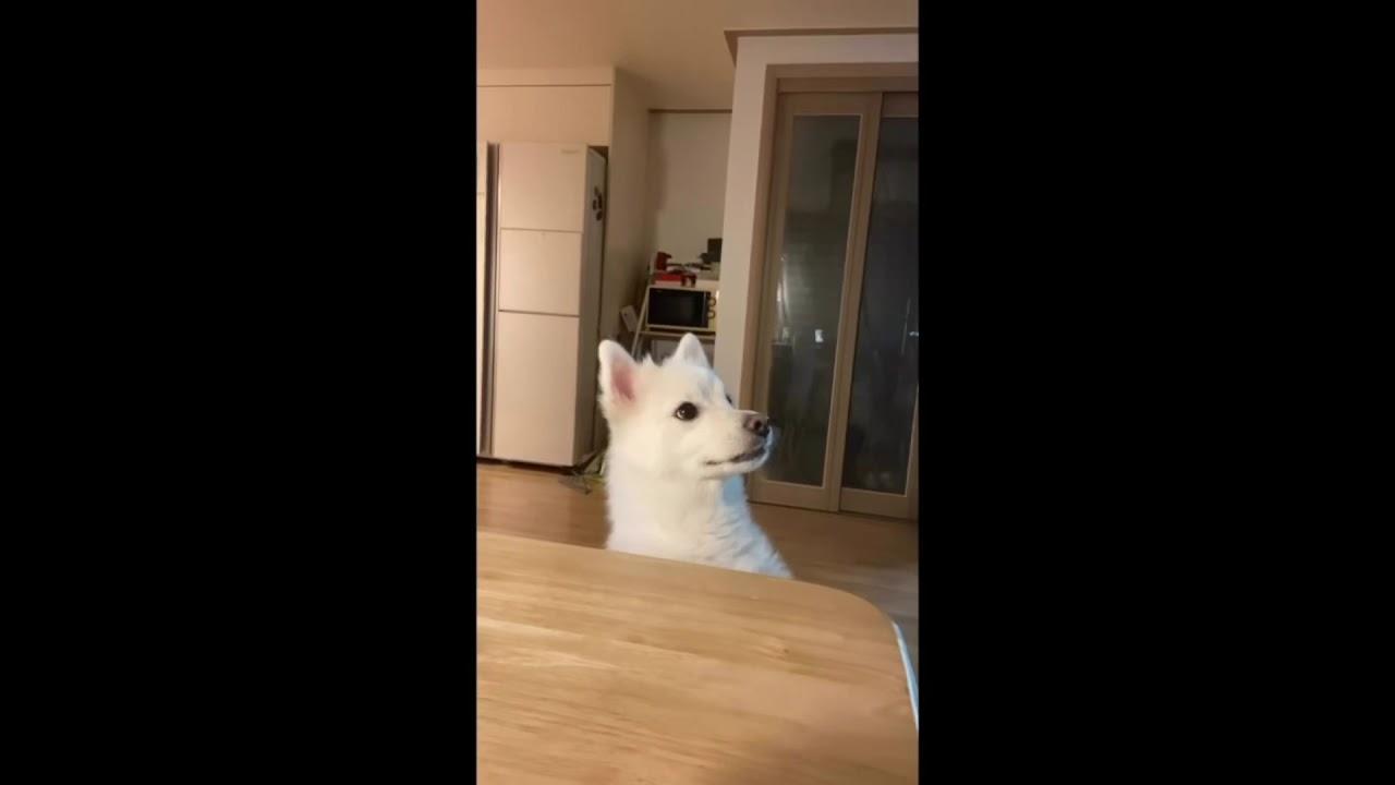 강아지가 배고프면 하는 행동