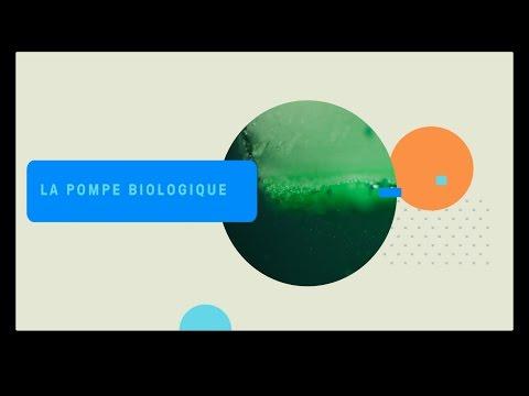 La pompe biologique / OA
