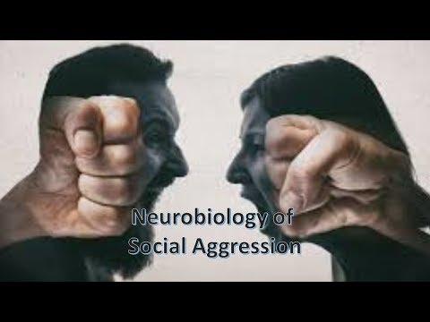 Neurobiology of Social Aggression
