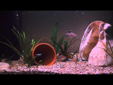 TV Aquarium 1080p HD (no ads)