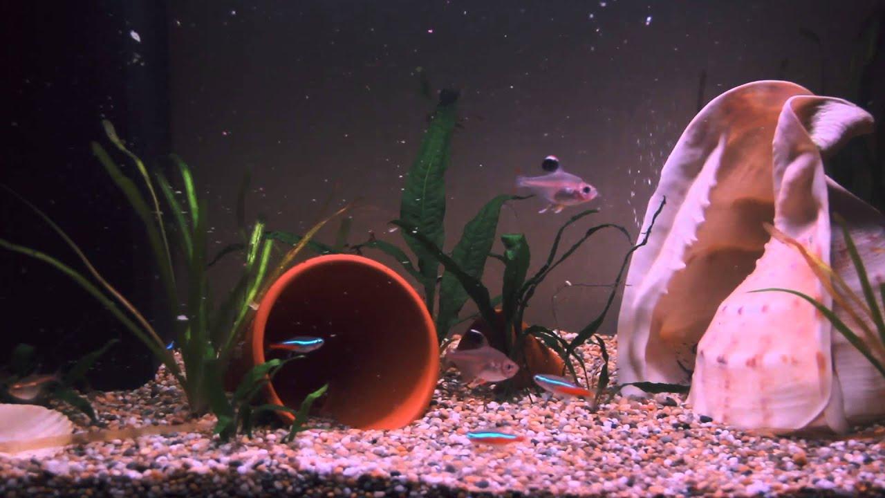 Fish tank for your tv - Tv Aquarium 1080p Hd No Ads
