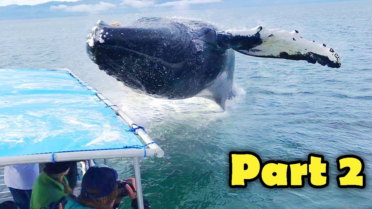 Whale Jumps and Close Encounters (part 2)