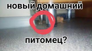 МЫШЬ В ОБЩЕЖИТИИ - МОЯ НОВАЯ ЛЮБОВЬ)) | Kukushkin Renat