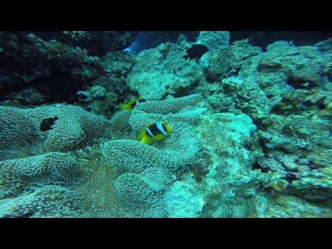 Red Sea Dive 2016