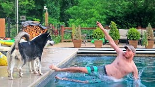 husky-reacts-to-owner-falling-in-a-pool