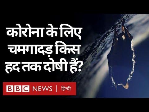 Coronavirus India Update : Corona Virus फैलने के लिए चमगादड़ों को दोष देना कितना सही? (BBC Hindi)