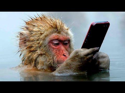 Вопрос: Как называются самые маленькие приматы лемуры или мартышки?
