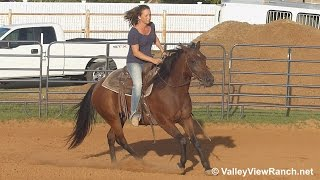 Tivio Screen - riding in outdoor arena #1 - Valley View Ranch