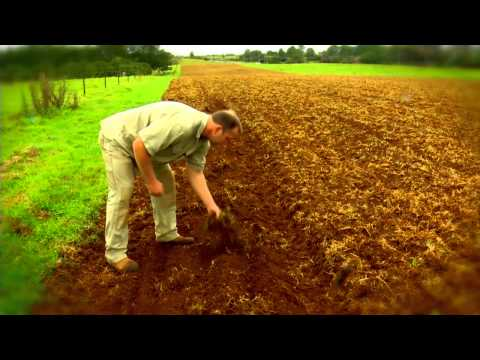 THE FARM AT BYRON BAY - FIRST GARLIC PLANTING