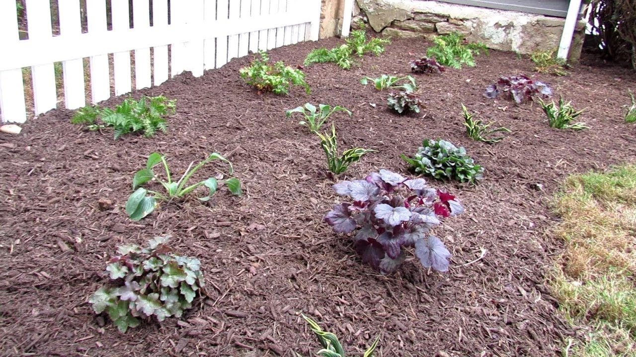 How To Plant A Hosta Fern Coral Bells Shade Garden 3 6 Hours