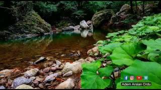 Kurbağa Kuş Ve Çekirge Sesleri 5 Saat Dinlendirici